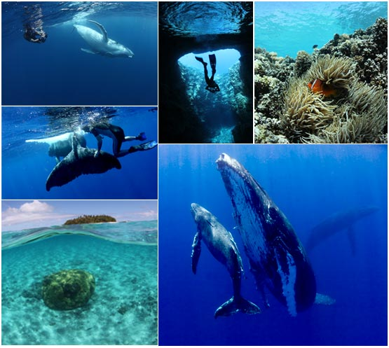 Whale and Tonga Collage