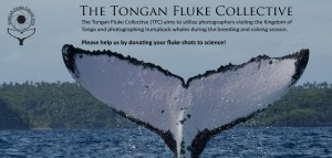 Flyer advertising Tongan Fluke Collective seeking photographs of whale tails