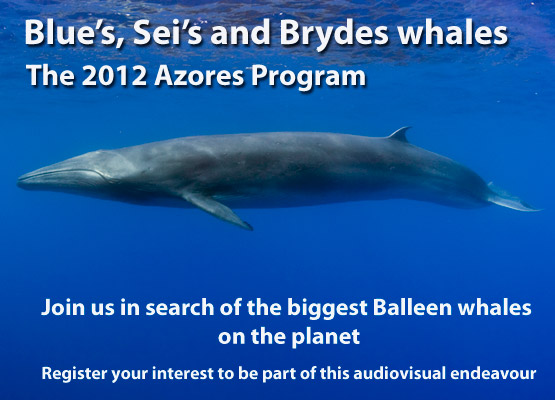 Sei Whale Promotional tile