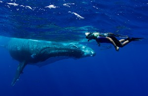 snorkeller Alice Forrest face to face with a humpback whale underwater on tour with Swimming With Gentle Giants