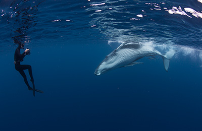 Underwater photographer Michaela Skovranova face to face with a humpback whale calf