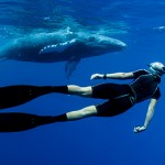Freediver Alice Forrest eye to eye with a humpback whale calf in the waters of Tonga on tour with Swimming with Gentle Giants