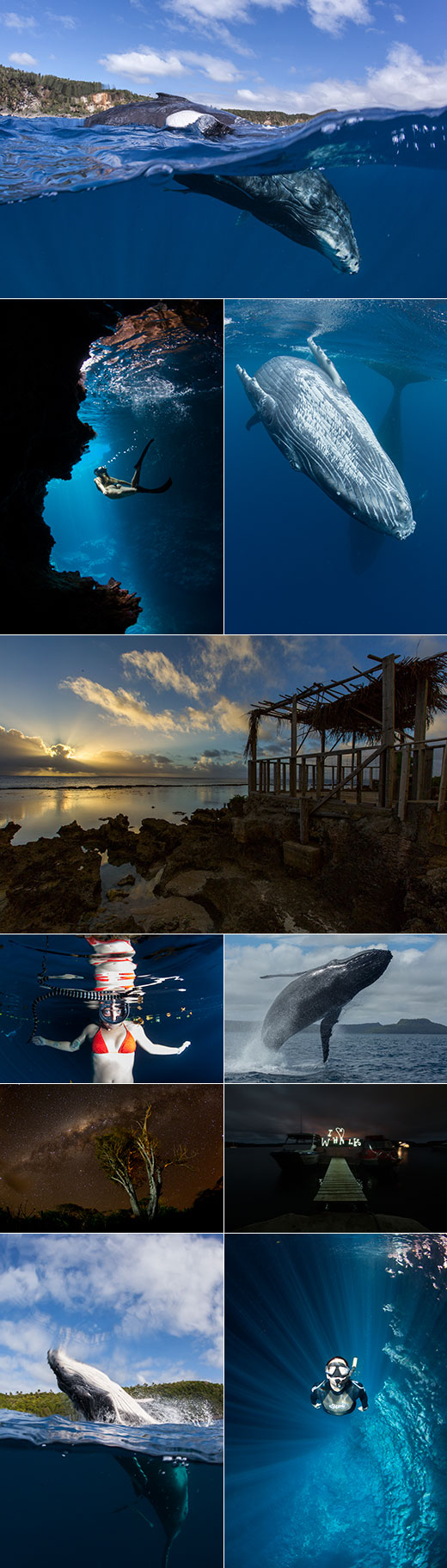 Tonga 2014 Season collage whales caves light writing