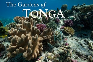 Coral reef gardens of Tonga, photographed by Scott Portelli on tour with Swimming with Gentle Giants