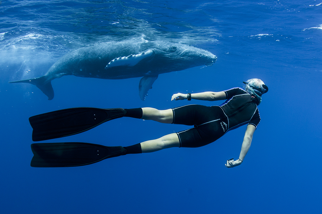 Freediver Alice Forrest looking into the eye of a baby humpback whale underwater, photographed by Scott Portelli on tour with Swimming with Gentle Giants