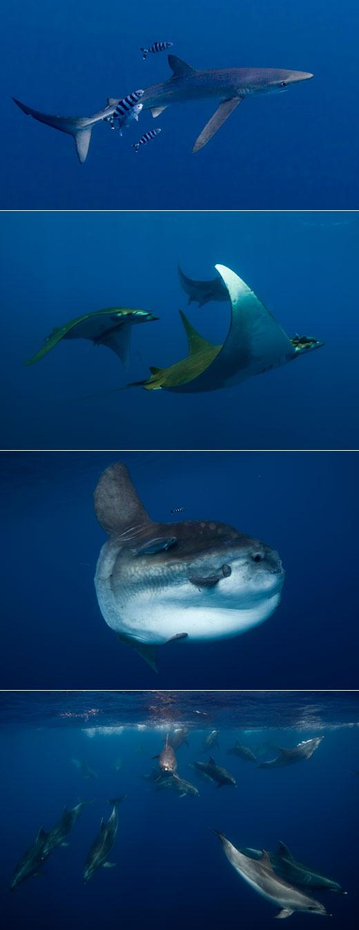 Azores Marine Life