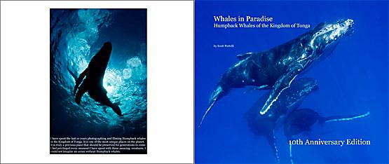 Humpback whale Book
